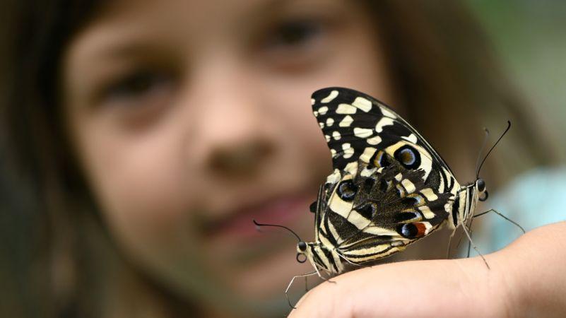 Motýle v meste